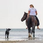 Reiterin und Hund am Strand tierpfoto