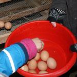 Eier uusnäh