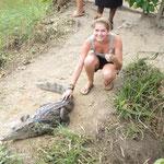 Krokodile streicheln