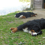 relaxed beim Spaziergang