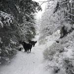 Winterwonderland - Bärideich & Rummelsbach gemeinsam unterwegs