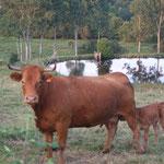 La creuse terre d'élevage : Gastronomie la viande Limousine