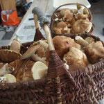 Entre mai et octobre la saison des champignons (séjour à thèmes)
