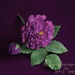 La Reine des Violettes