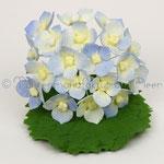 Hydrangea - Hortensie in blau