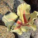 Hibiskus mit Zuckerlibelle