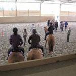 Formación profesional de domador de caballos en Equitación Etológica con Elisabeth de Corbigny