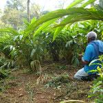 Korarimapflanzen