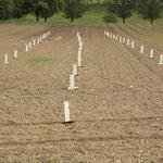 50 der 400 Bäume wurden mit einem Bissschutz ausgestattet