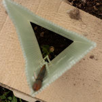 Ansicht von oben in den Verbisschutz und außen eine Pappe gegen Unkraut