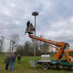 26.2.2014  der NABU bessert das Nest erneut aus.--   Foto: Ingolf Grabow