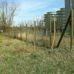 """Februar 2007 = frisch gesteckte """"Weiden-Allee"""" an der Marie-Curie´-Straße"""