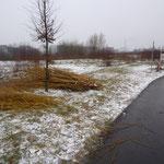 Februar 2013 = Weidenruten liegen am Wegrand bereit zur Abfuhr