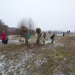 Februar 2013 = nach der 7. Köpfung, Weidengruppe Nr. 23
