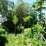 Kopfweide und Rankbogen im Hausgarten