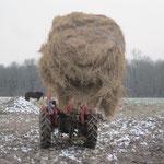 Das war der letzte grosse Rundballen, ab sofort fahren wir die normalen Kleinballen mit dem Auto und Anhänger auf die Weiden.