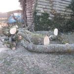 Gleich vor dem Holzlagerschopf werden die Bäume zersägt und dann später gespalten! uff!!!