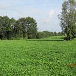 Die Weiden verfügen über grosse Bäume welche wertfollen Schatten spenden.