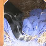 Juhuuuu seit es Stroh in der Hundehütte hat wird sie benutzt.