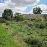 der Garten wird auf Vodermann gebracht :-)