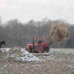 Die Pferde wurden per Traktor mit Heu versorgt.