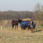 Die einen Pferde benötigen bei dieser Kälte eine Decke.