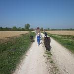 Anschliessender Spaziergang mit den Ponies und Hunden.
