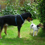 Bob ist hellbegeistert von Romeo :-)