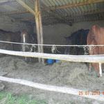 Die Pferde mussten auch nicht verhungern :-)
