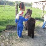 Pony Ariel putzen macht spass.