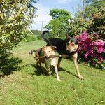 Denja und Roxy sind begeistert, dass Maja in der Nähe des Weihers jätet, dort kann man soooo toll mit dem Stecken spielen :-)