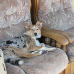 das ist mein Sofa!