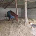 Wenn nötig, oder auf Wunsch werden die Pferde auch gedeckt und seperat gefüttert.