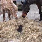 Fritzli kennt keine Angst, oder weiss nicht wie klein er ist :-)