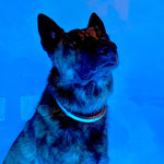 I'm blue da ba dee da ba daa, da ba dee da ba daa…  - Odin The Eye Of The Tiger v Heidas Erf