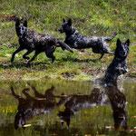 Neeltje, Noia en Heibel, spiegeling in het water
