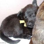 Slapen tegen mama`s rug
