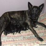 Heibel met pups
