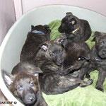 Een mand vol pups