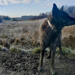 Spijker (Idas X Heibelvd `s-Gravenschans) tijdens een winterwandeling