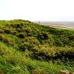 Dünenladnschaft auf Wangerooge