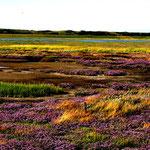 Wattenmeer Wangerooge