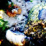 Unterwasser-Welt Wangerooge