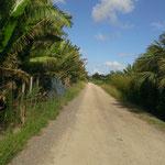 沖縄っぽい一本道。ざわわ~