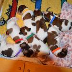 Puppy 1(rot), Puppy 2(gelb), Puppy3 (lila), Puppy 4 (blau), Puppy 5 (creme), Puppy 6 (grün), Puppy7 (orange)