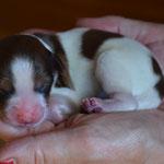 Puppy Nr. 1 (Mädchen)