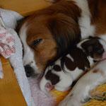 Kuscheltime, Puppy Nr.4