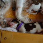 Puppy Nr. 3 (lila)