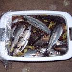 die Fische nach einer Nacht im Surbad