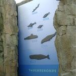 Eingangstafel zur Seehund-Grotte im Frankfurter Zoo